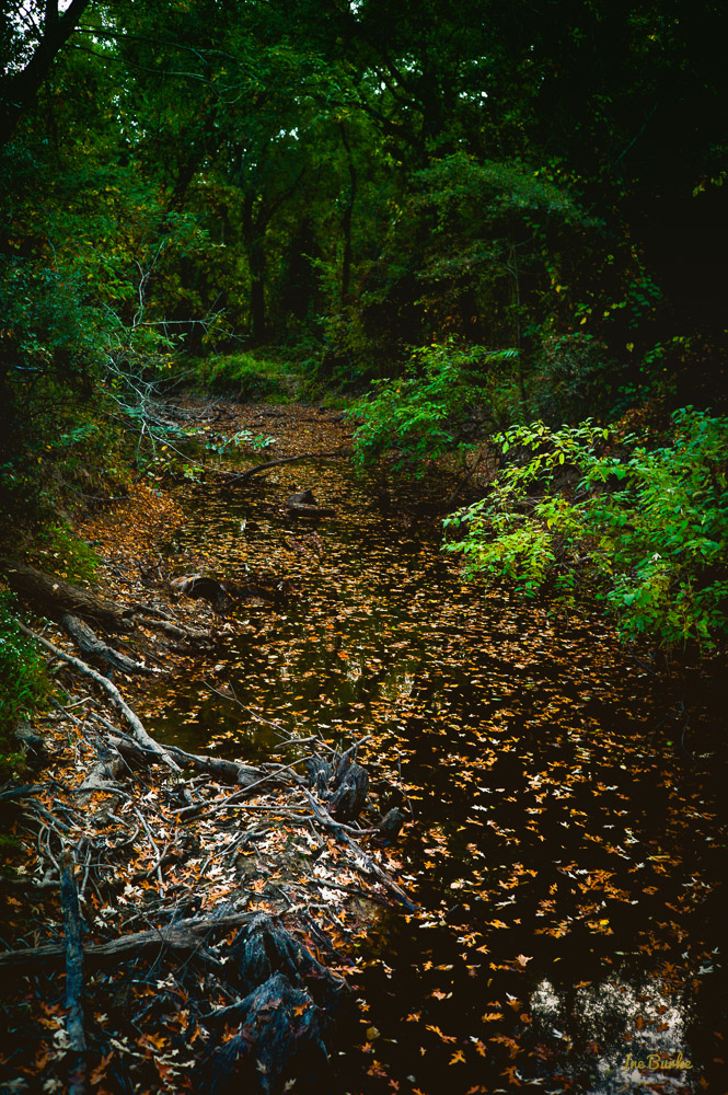 Fall Mill Creek-151021-L1012377-Edit-Edit
