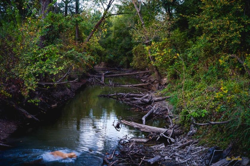 Fall Mill Creek-151021-L1012384
