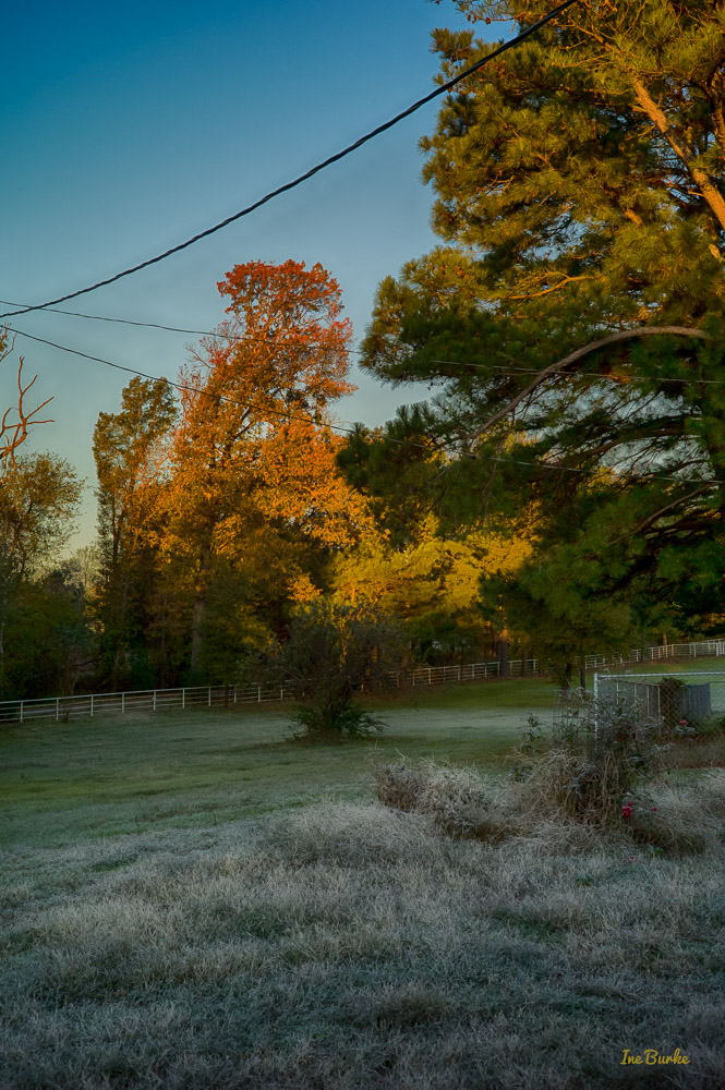 First Frost-151122-L1012537_HDR