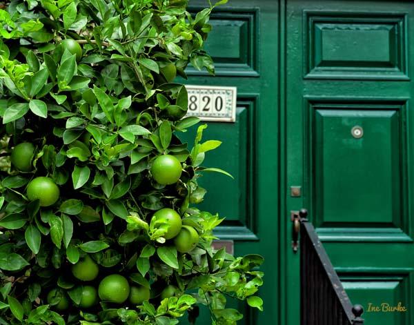 Ine Burke | Lime Green