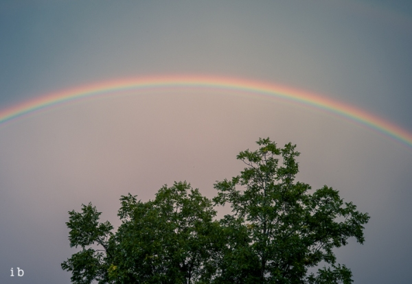 Rainbow over Pecan Tree