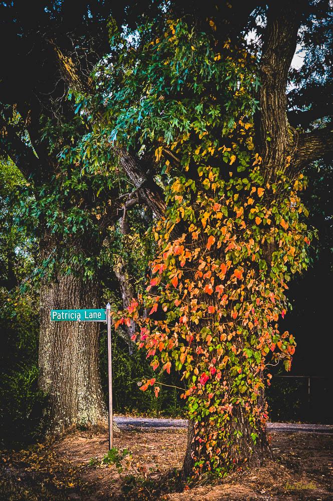 Orange Foliage-151021-L1012371_HDR