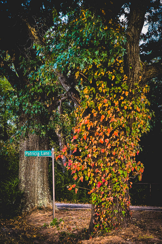 Orange Foliage-151021-L1012371_HDR