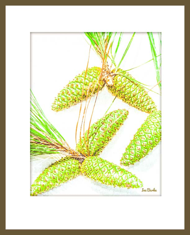 Pine Cones in Frame