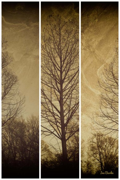 Triptych Cypress Tree -150106