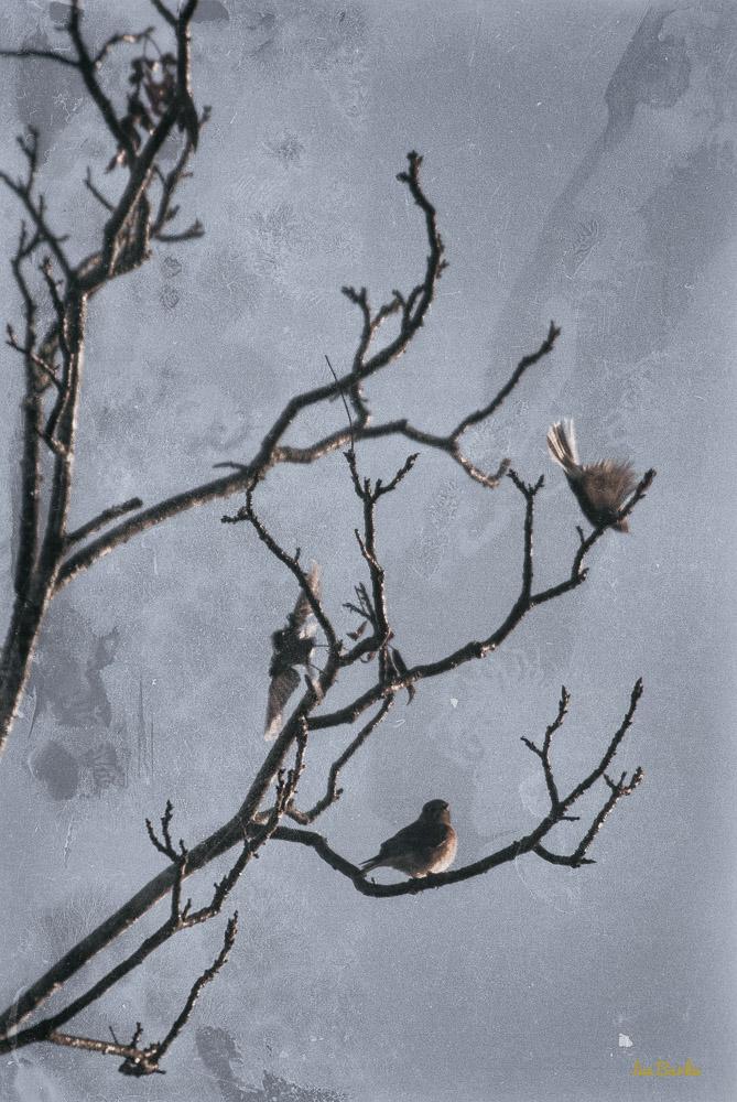 Painting Birds-151202-153_0106-Edit