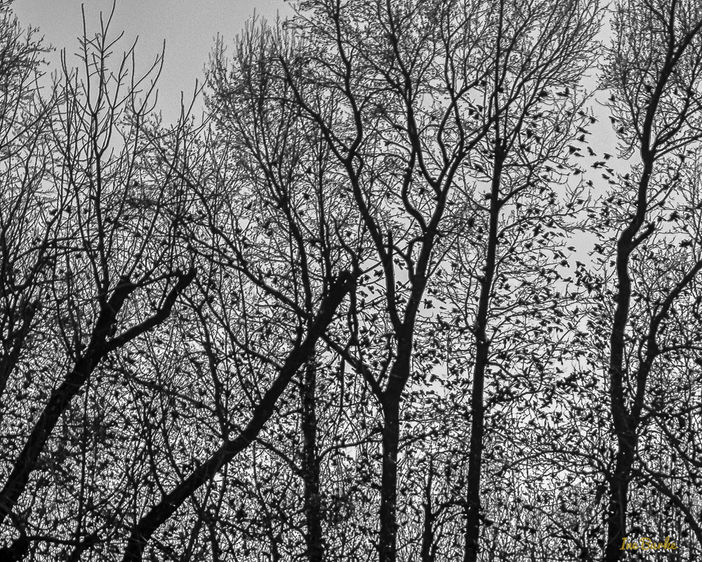 Black Birds-160110-156_0114