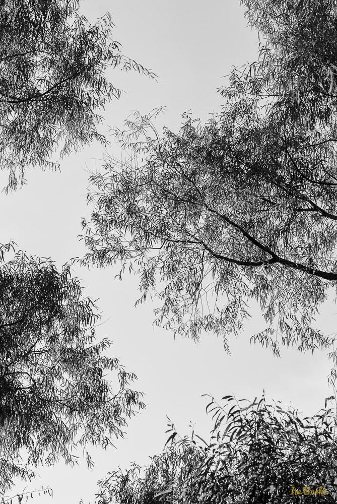 Back Pasture-141024-146_0213-Edit-Edit