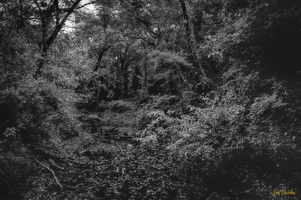 BW Creek-151021-L1012379_HDR