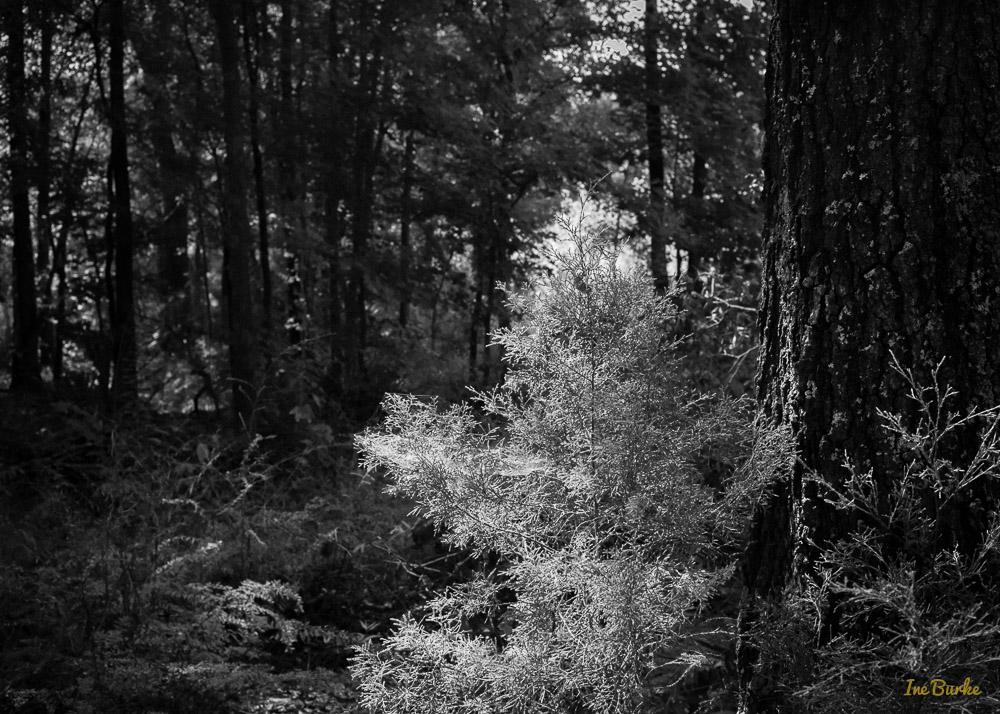 BW Nature-140904-L1007797
