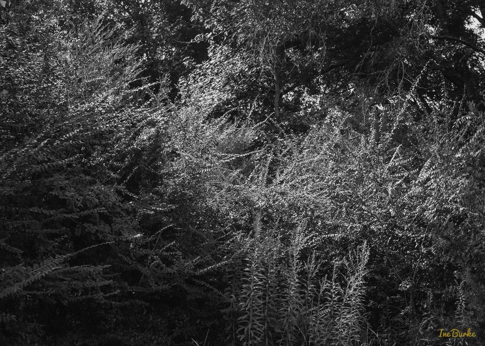 BW Nature-140904-L1007799