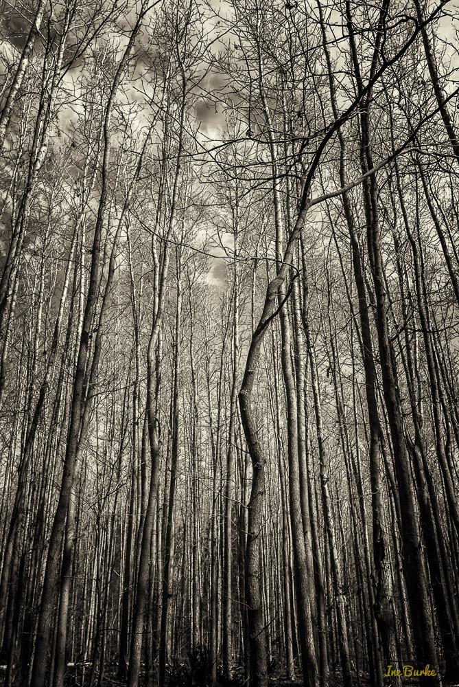 Camper Nature Trail-140222-136_0008