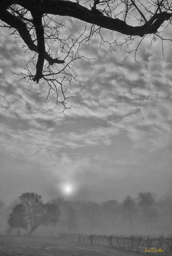 Fog-150120-146_0110-Edit-Edit-2-Edit-Edit
