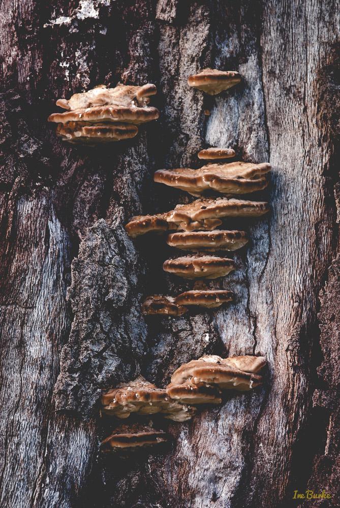 Mushroom-150530-146_0033