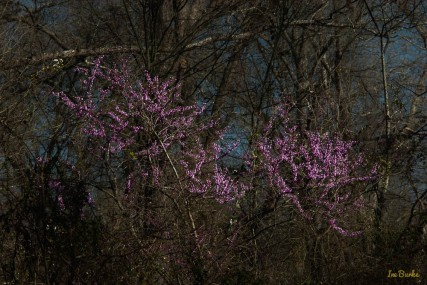Spring2016-160226-157_0007-Edit