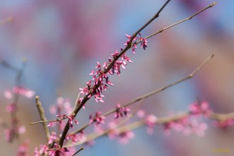 Spring2016-160226-157_0041-Edit
