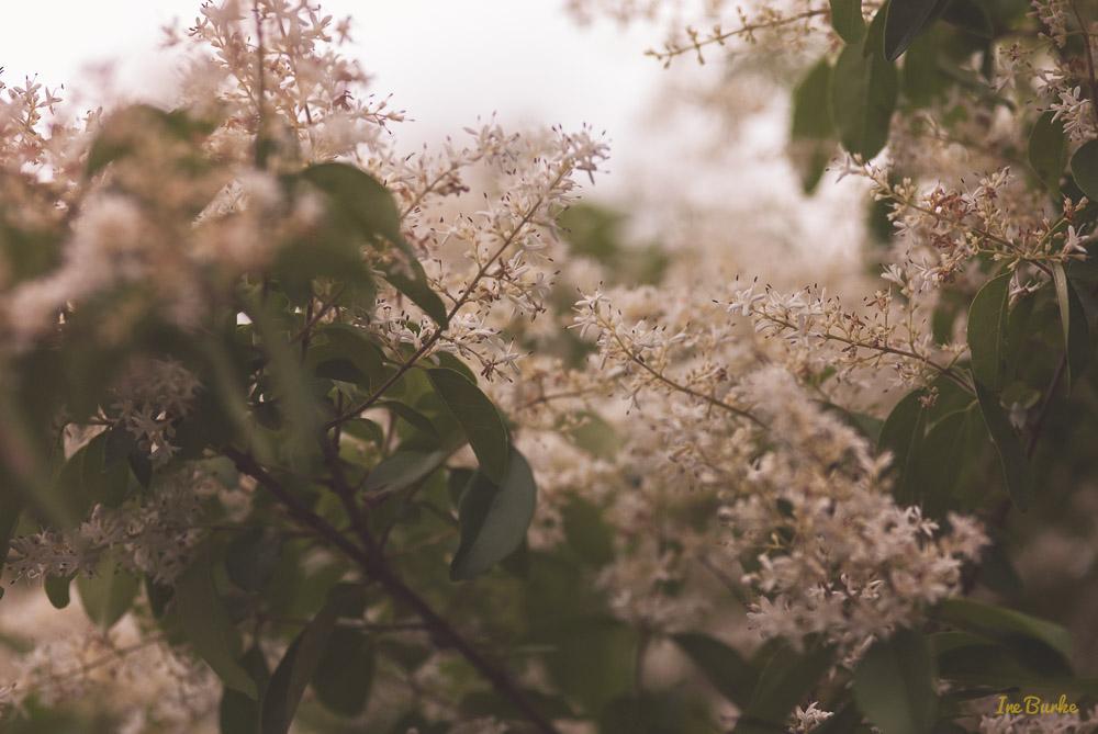 Subtle Blossoms-150506-146_0150