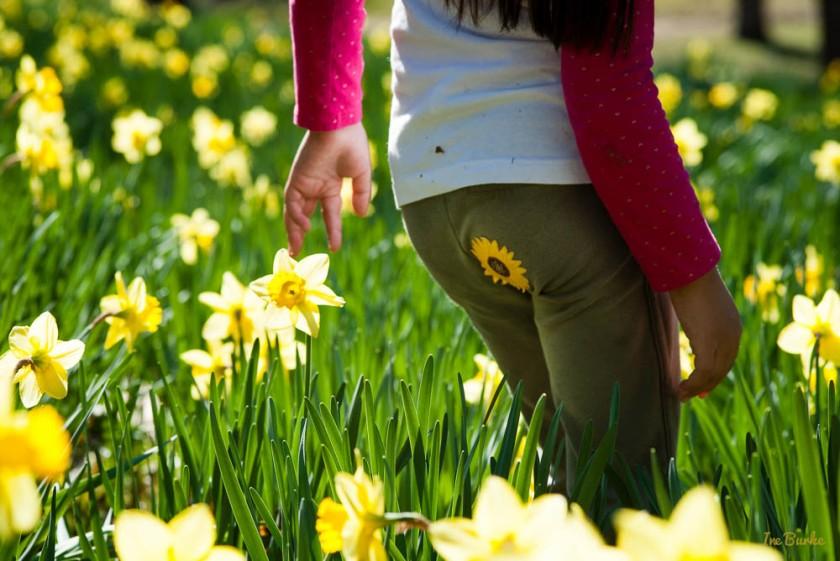 Mrs Lee Daffodil-160227-158_0018