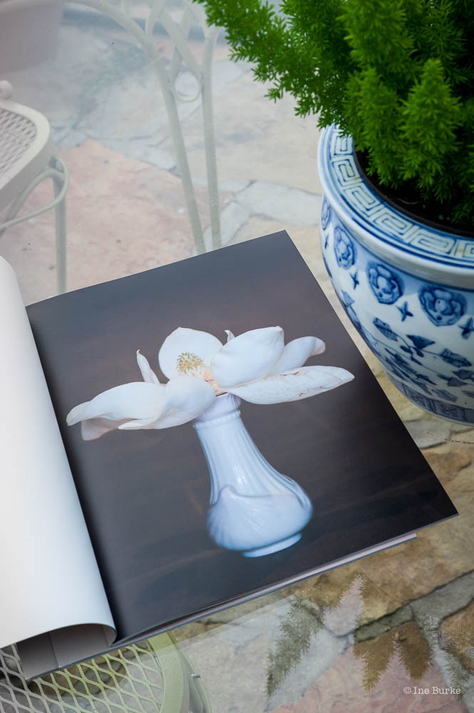 Magnolia Promo-170627-L1001409